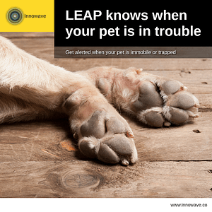 Pet Care: LEAP knows when your pet is in trouble